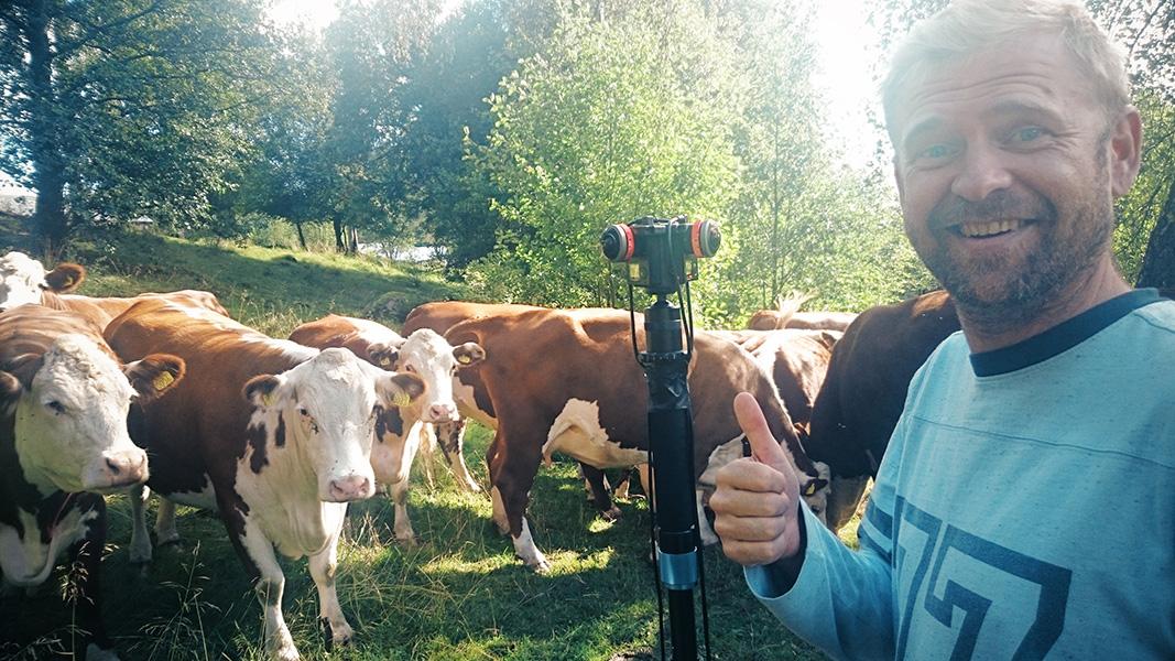 lrf-cows-sweden-vr-360