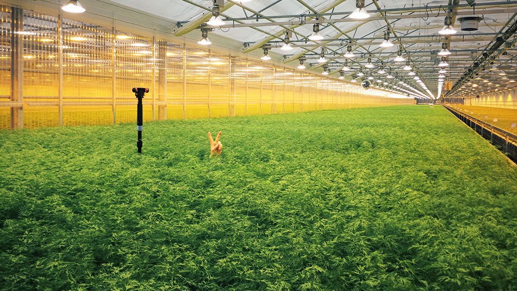 lrf-greenhouse-sweden-vr-360