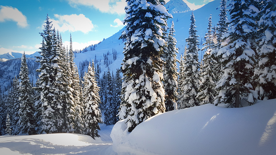 armada-ski-retallack-trees